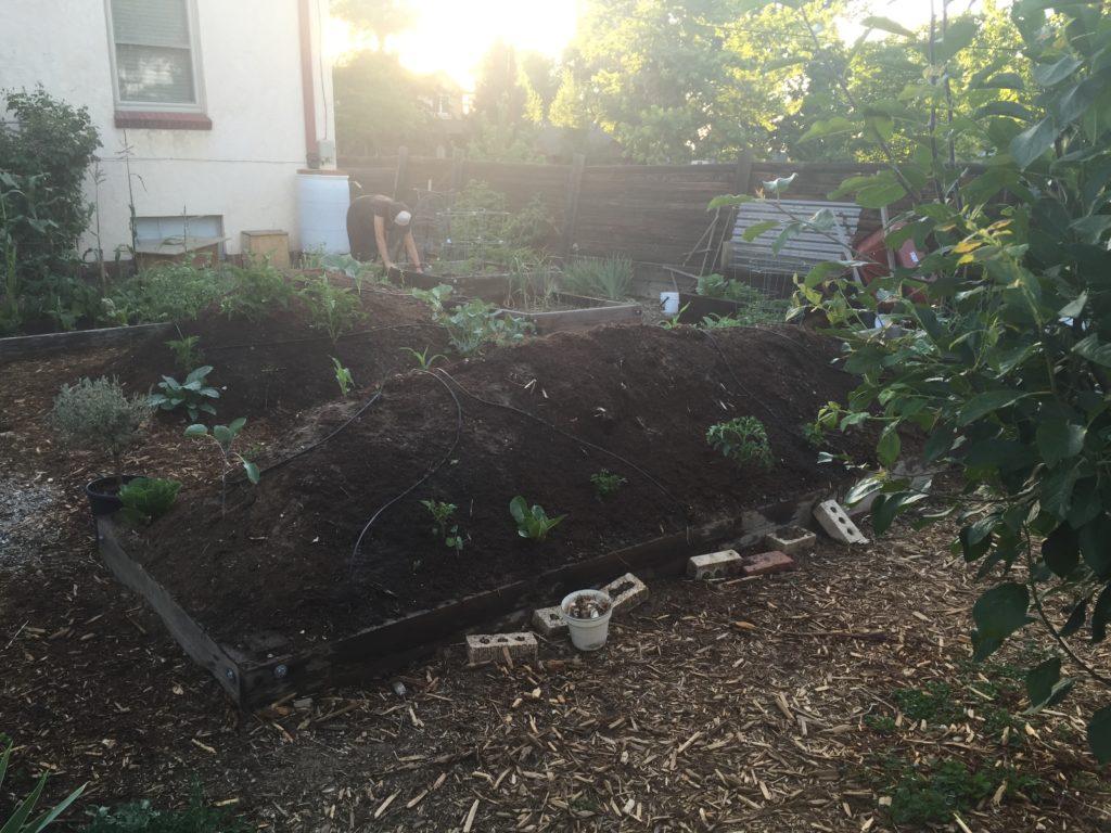 backyard garden beds at sunset